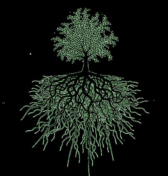 As raízes da Teologia da Prosperidade