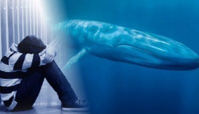 O desafio da Baleia Azul: O que os adolescentes suicidas podem nos ensinar?
